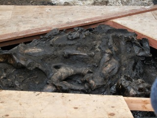 You can see the fossils still trapped in this tar pit - La Brea Tar Pits and Page Museum